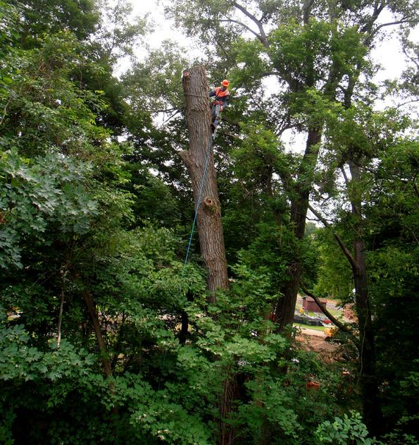 Tree Services Of WNY LLC